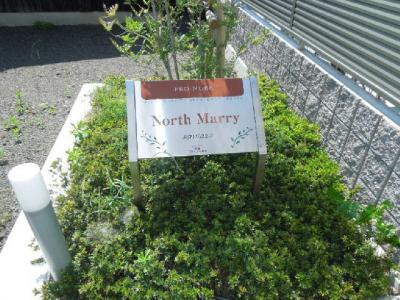 【その他】North Marry・