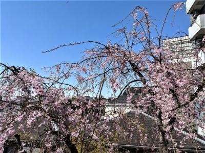 春には窓から桜を望めます。(季節・天候によります)