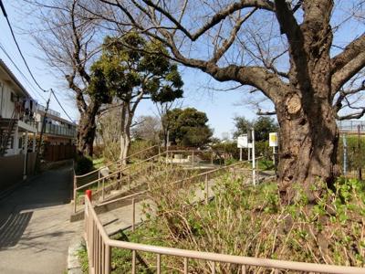 【周辺】桜上水マンション