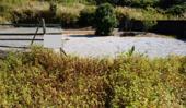 いの町池ノ内山中の画像