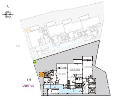 【区画図】Lupinus(ルピナス)