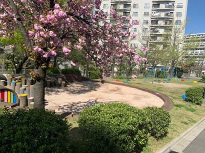 近所の公園です。