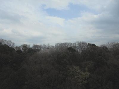 ≪バルコニー殻の眺望≫東側バルコニーは緑一面の眺望です。