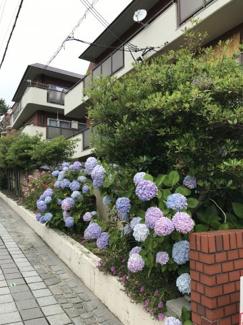 綺麗な紫陽花が咲き誇る花壇があります
