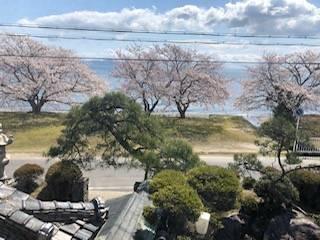 桜と琵琶湖のコラボレーション