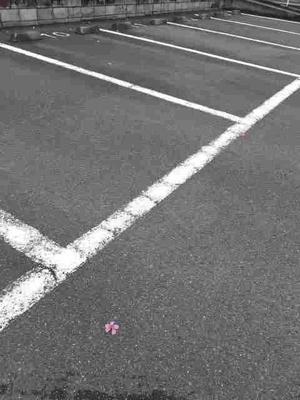 【駐車場】パインヒル石井C