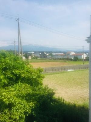 【展望】ビオラ桜井B