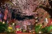 「目黒区八雲アドレス」桜並木が近くにある土地の画像