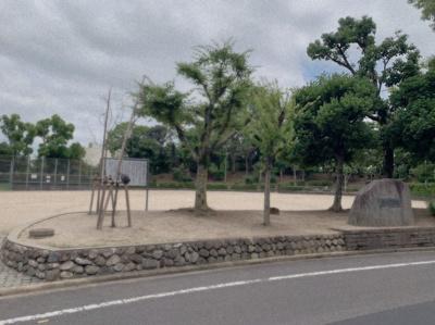 近くの公園です。広いです。