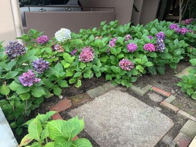敷地内の植え込みでは季節の花が咲きます。