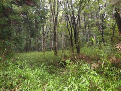 ちょっとした林です。調整区域、現状有姿での引き渡しになります。面積1532坪。