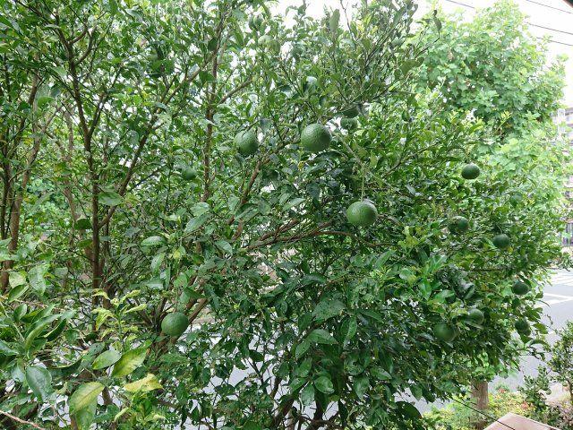 お庭には果樹もあり、季節の移り替わりで楽しめますね。