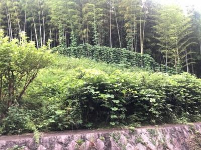 【展望】サンヴェール千里緑地公園