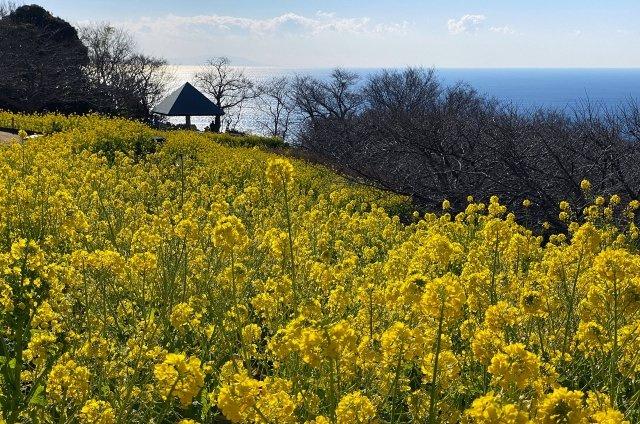 吾妻山公園まで徒歩約10分。相模湾、富士山が望める美しい公園です。