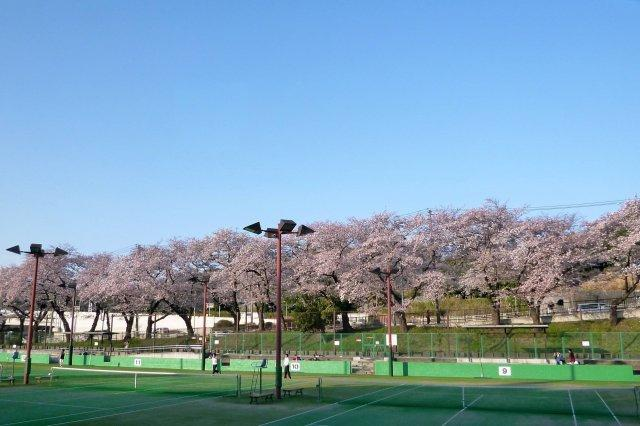 三ツ沢公園(徒歩約10分)春はお花見スポットとして有名な公園。球技場、テニスコート等もあります。