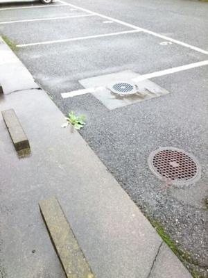 【駐車場】プランタン城西