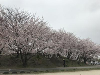 桜の季節にはお花見も楽しめます♪