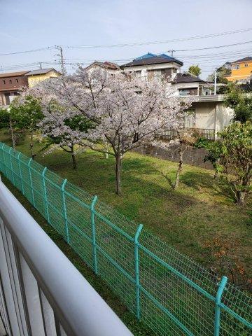 春にはバルコニーから桜が見られます。(令和3年春バルコニーから撮影)