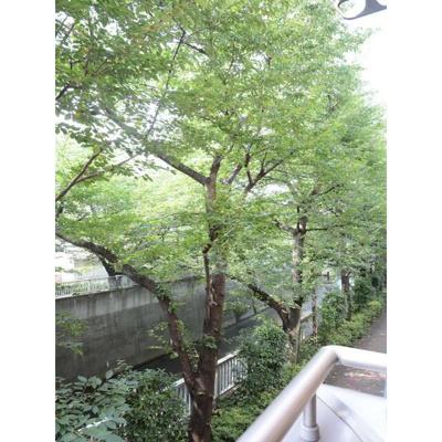 【展望】コーポトキワⅡ