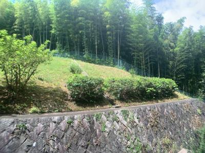 緑の多い眺望です。