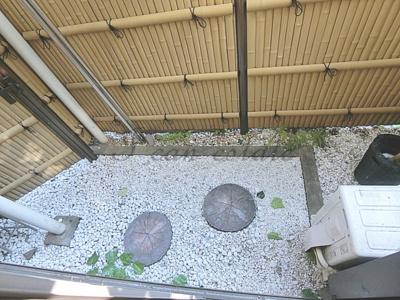 【庭】下谷一丁目アパート