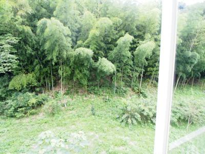 竹林もあって風通し良好です