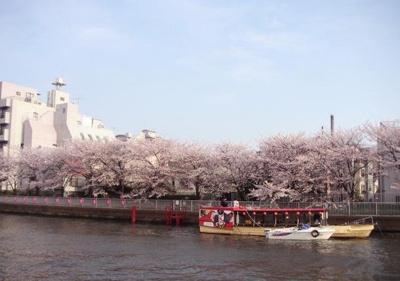 【周辺】エルスタンザ清澄白河