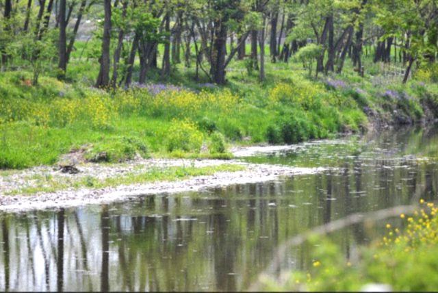 「オオムラサキの森・蝶の里公園」まで約1200m~この公園は、オオムラサキの森やホタルの里等と一体的に、町の自然保護のシンボル的存在♪