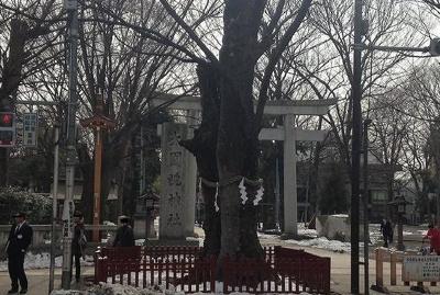 大國魂神社まで600m