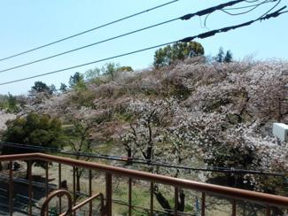 眺望良好 春には桜景色になります