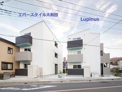 【その他】Lupinus(ルピナス)