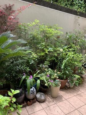 お庭感覚のドライエリアです。
