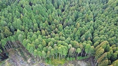【前面道路含む現地写真】小野尻売り山林