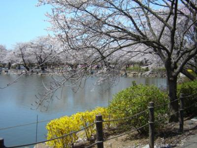 鶴ヶ島市運動公園まで480m