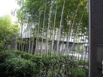 玄関前から見える竹林です