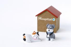 尼崎市のペット可物件を探している方必見!飼育の注意点と病気についての画像