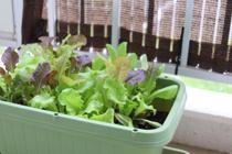 新築一戸建ての庭で家庭菜園を楽しむ方法を知りたいの画像