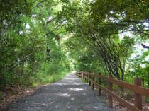 八王子市の自然豊かな公園!八王子市長池公園で里山遊びの画像