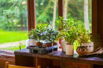 【植木鉢で大量発生しているコバエ】原因と効果的な駆除方法が知りたい!の画像