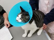 ペットの主治医探しにおすすめ!横浜市南区の動物病院2選の画像