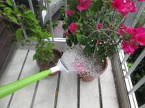 ベランダガーデニング好きな方必見!市川市内でおすすめの花屋2選の画像
