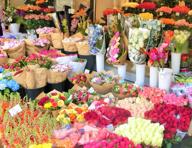 新橋周辺でガーデニング・お祝い用の花を買える花屋はどこ?の画像