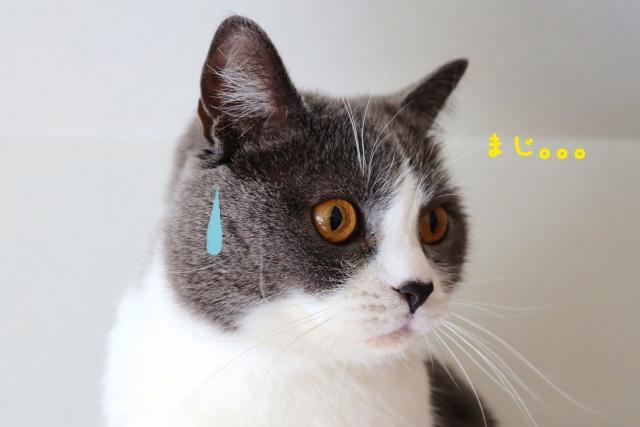 京都市で猫の飼育が可能な賃貸物件特集の画像