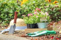 庭がある賃貸でできるガーデニングとは?メリットやおすすめの植物をご紹介!の画像