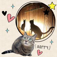 CS GARDEN花小金井 猫ちゃんの「好き」をたくさん集めましたの画像