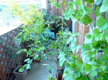 葛西でベランダガーデニングのお花を買うなら!おすすめの花屋2つをご紹介の画像