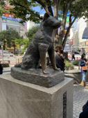 渋谷にgoの画像