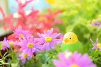 鶴ヶ島市にあるベランダガーデニングにおすすめの花屋の画像