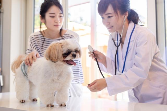 米子市で動物病院をお探しの方におすすめ動物病院紹介の画像