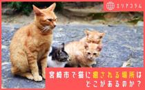 宮崎市で猫に癒される場所はどこがあるのか?の画像